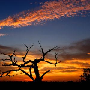 Rodney Johnson - Mesquite Tree at Sunset 2795